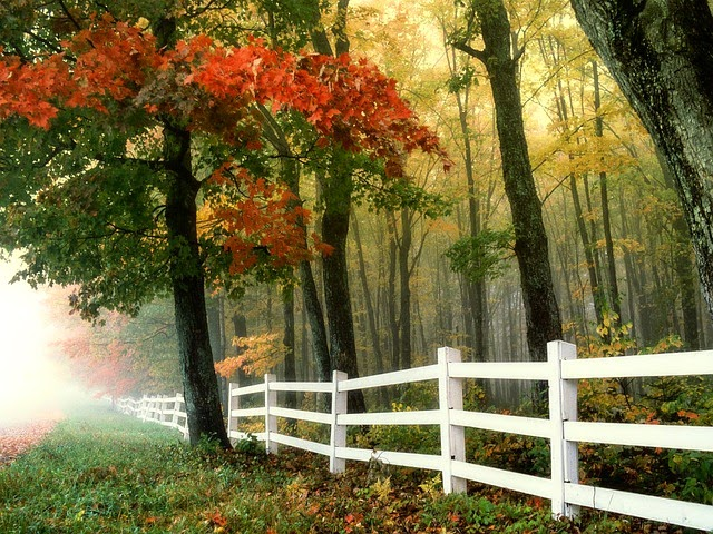 """""""Autumn Days"""""""
