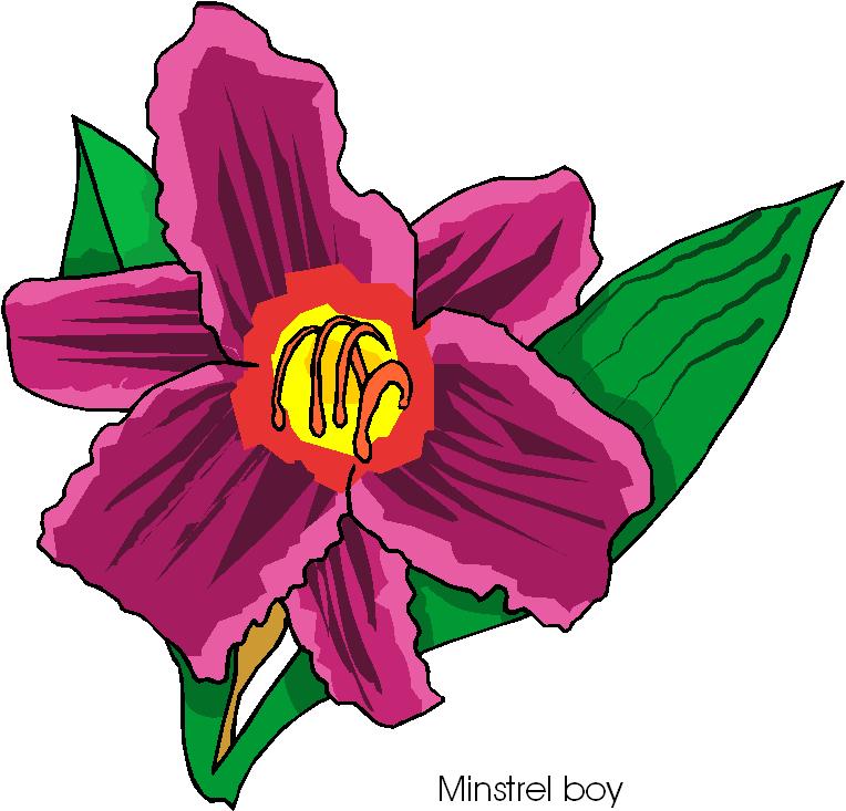 Minstrel Boy Flower Free Clipart
