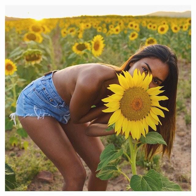 sunday,sunflower,tournesol,jaune,yellow