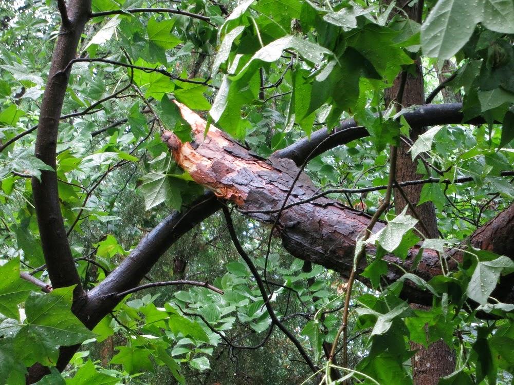 Mulch Mat Tree Ring Menards