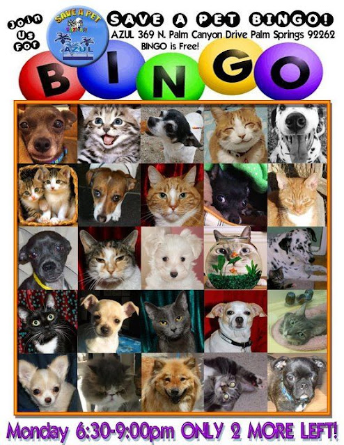 April 20 - Save A Pet Bingo @AzulPalmSprings 630pm-9pm