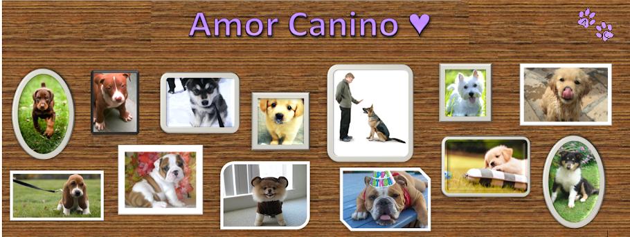 Amor Canino ♥