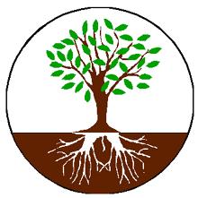 Seo roots