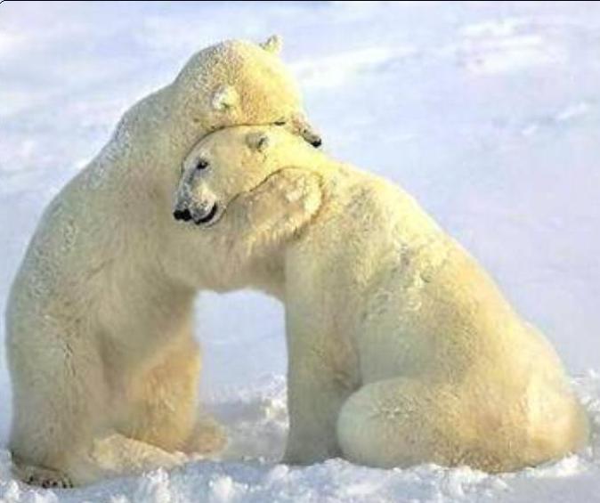 Utopías y Realidades Universales: Abrazoterapia: El abrazo de oso