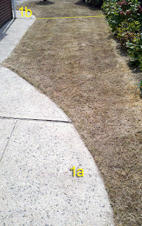 Lawn 1a eight days after Nature's Avenger spraying
