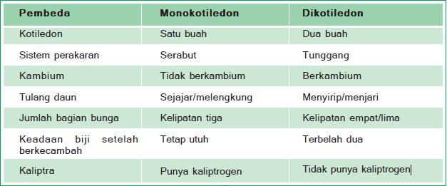 monokotil dikotil info-gudangilmu.blogspot.com
