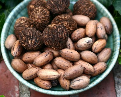 Missouri Black Walnuts & Missouri Pecans