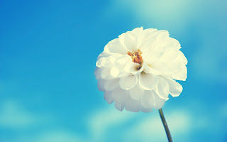 Awesome White Flower Blue HD Wallpaper