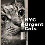 NYC cats NEED your help