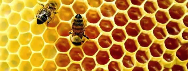 Trypophobia Sarang Lebah