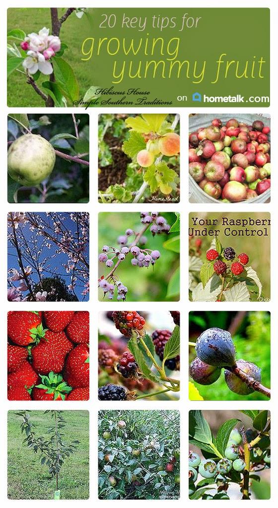http://www.hometalk.com/b/2206203/fruit-orchard-tips