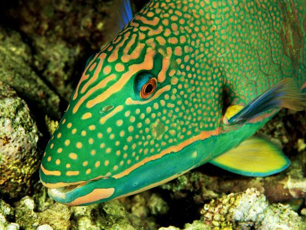 Ifi Top 10 Top 10 Most Colorful And Beautiful Fishes In