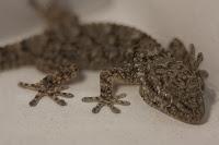 Foto original salamandra reflex y tubos de extensión