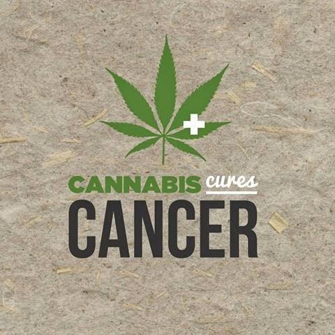 34 ιατρικές μελέτες που αποδεικνύουν ότι η κάνναβη θεραπεύει τον καρκίνο  Kannabis