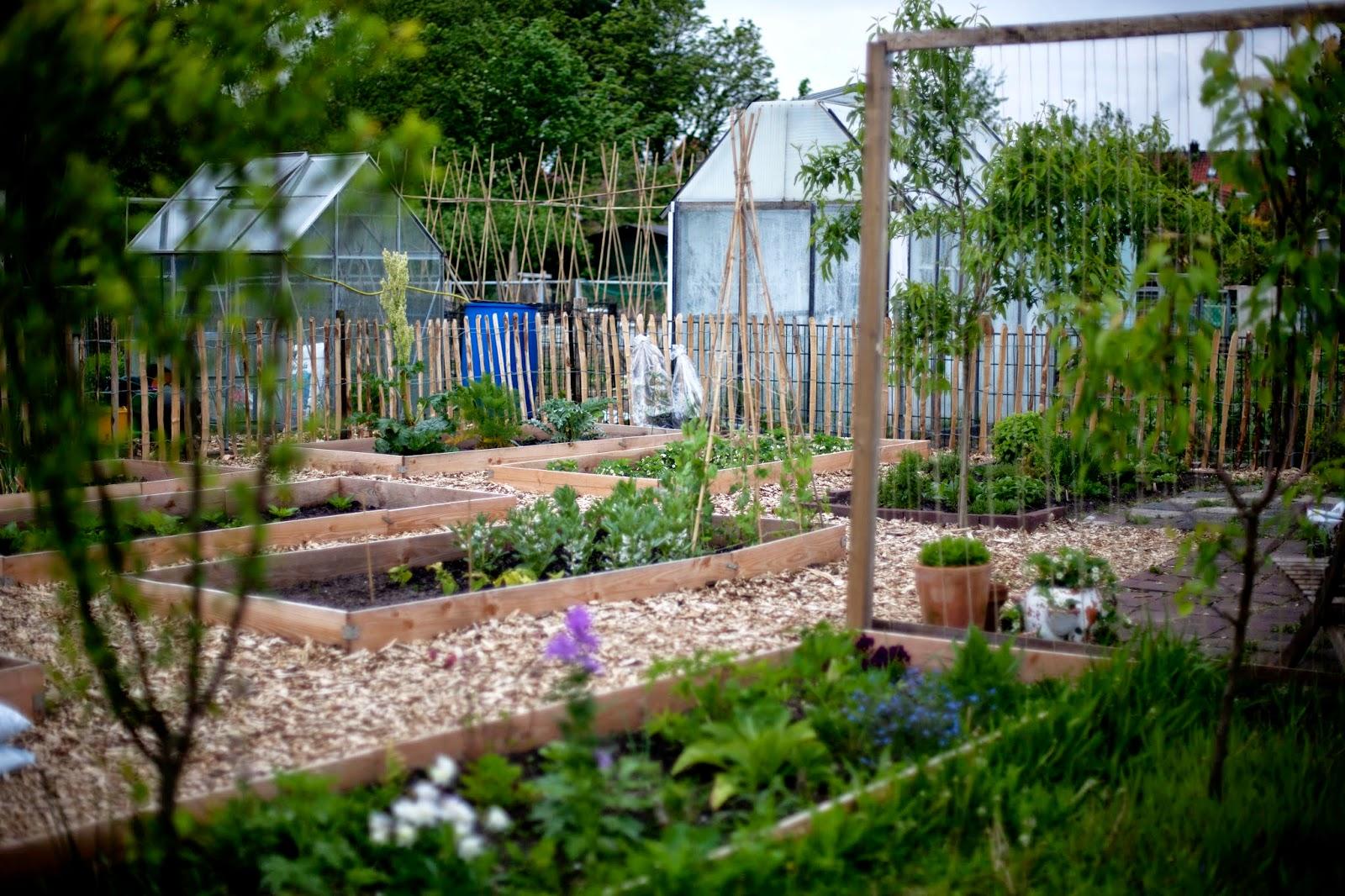 Mijn huis tuin keuken de moestuin op 18 mei 2015 for Huis in de tuin