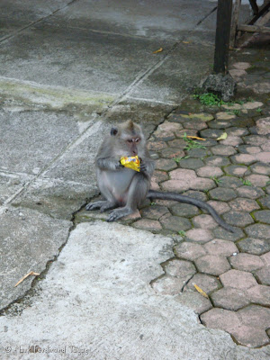 Ubud Monkey Forest Bali Photo 2