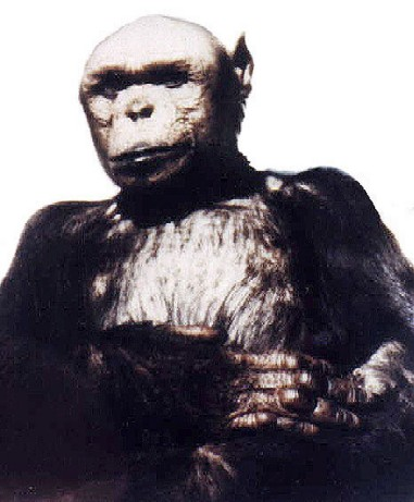 Un antropólogo italiano denuncia la creación de híbridos entre el mono y el hombre