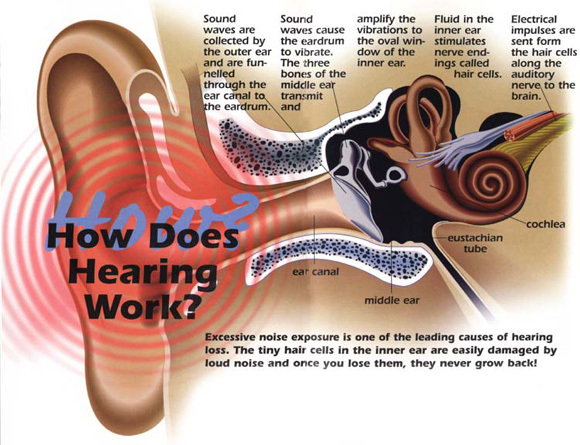 Sound - General Knowledge & Awareness