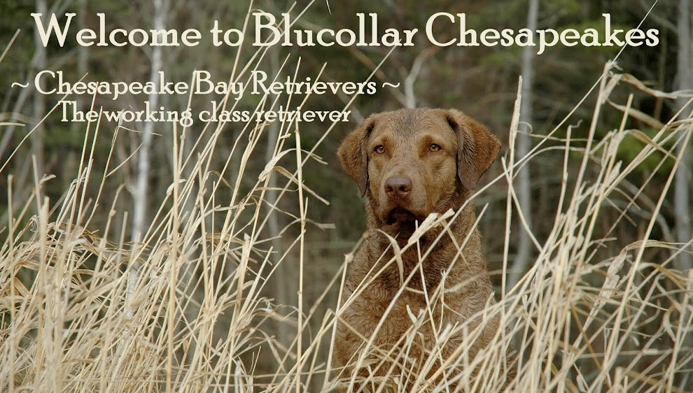 Welcome to Blucollar K-9s