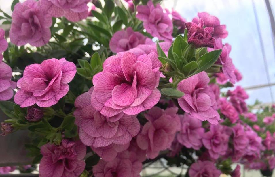 Puutarha Kukkamestarit