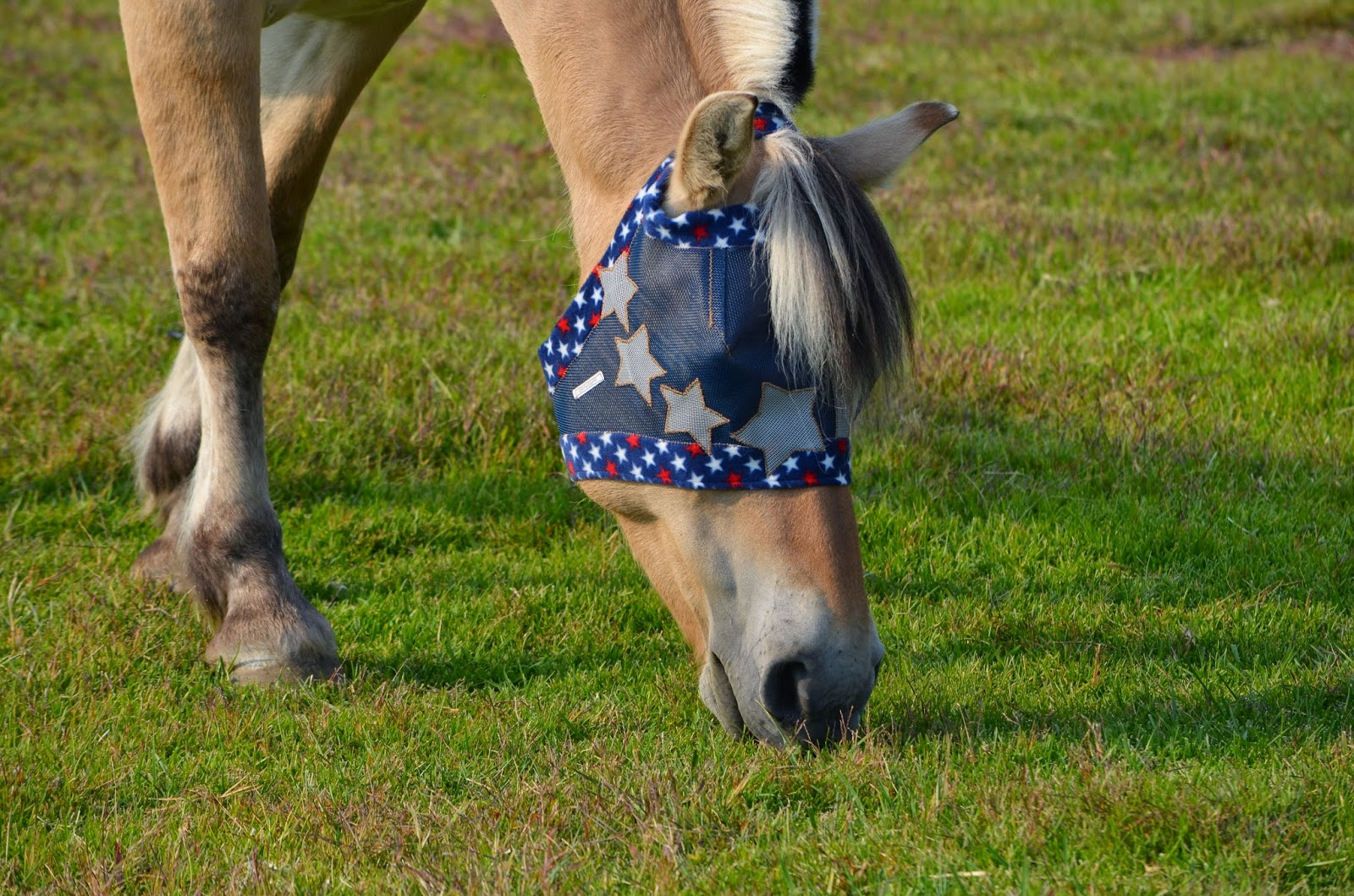 Custom horse fly mask