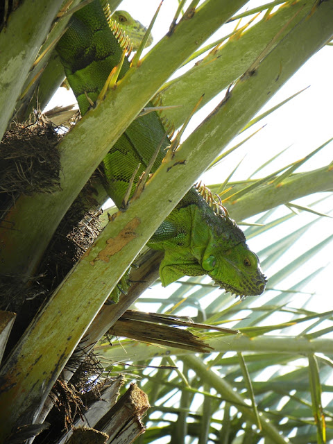 Lizard in palm tree