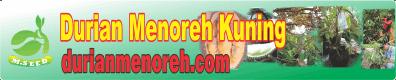 DURIAN MENOREH KUNING