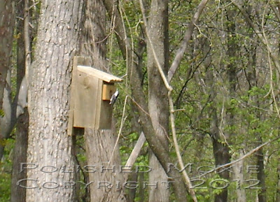 Image of a nuthatch at the opening of a birdhouse.