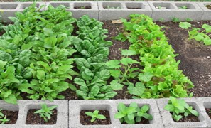 how to make a raised bed garden with cinder blocks