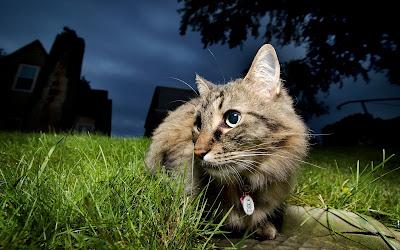 Gatito sigiloso en espera de un ratón distraído