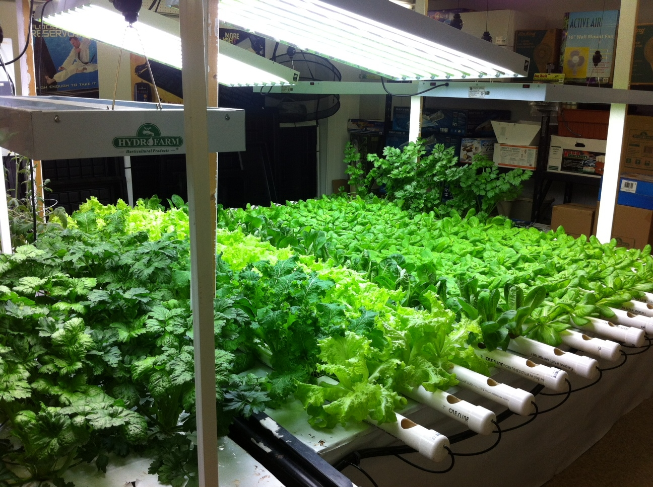 Aquaponics - Growing vegetables indoors practical tips ...