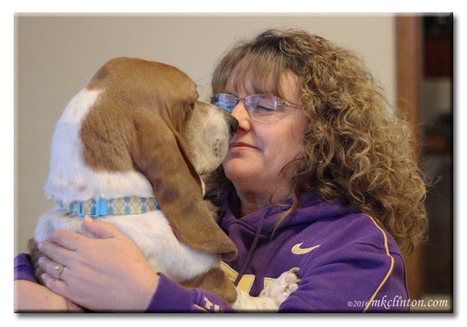 Bentley Basset Hound and pet parent nose to nose