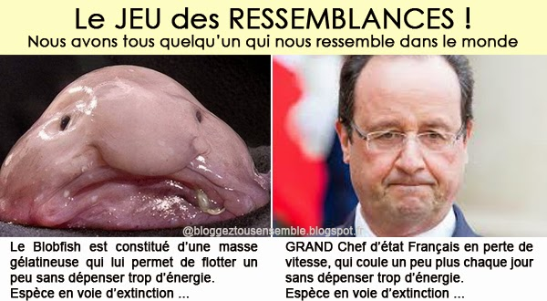 Ressemblance entre Hollande et le Blobfish
