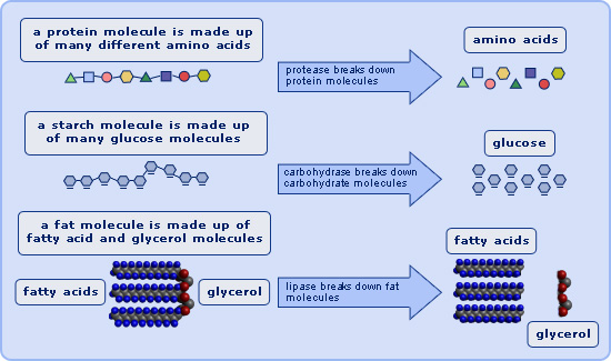 final exam acids and enzymatic reaction The pcat exam includes 48 chemistry questions that  categorize the options as strong acids, weak  vmax is the maximum rate at which an enzymatic reaction can.