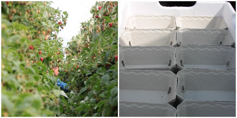 Selvpluk af jordbær