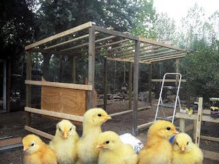 ……….Happy hens, happy farmer