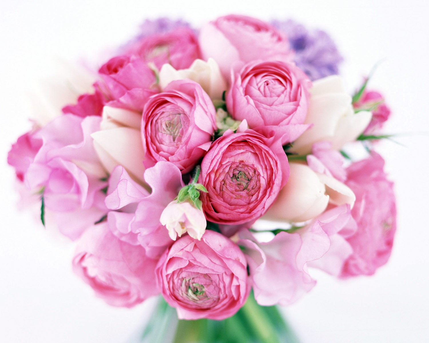 Pink peony flowers bouquet hd wallpaper