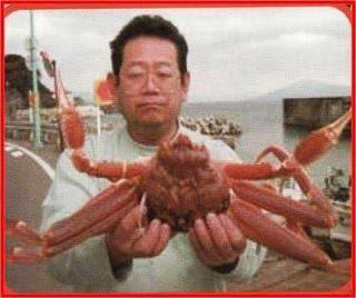 Ketam Merah Lautan Jepun - Bahan Asas Koyo Chitosan
