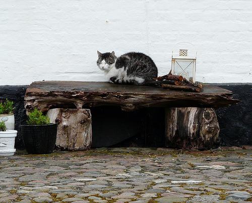 Gato e chuva, será que é uma boa combinação?