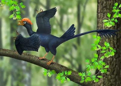 Dinosaur-era bird had two tails