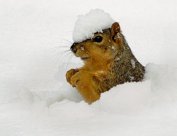 Funny animals of the week - 21 February 2014 (40 pics), squirrel playing in the snow