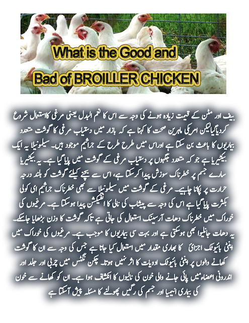 What is Good and Bad of Broiler Chicken