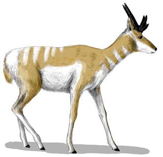 antilocapridae extinta Osbornoceros