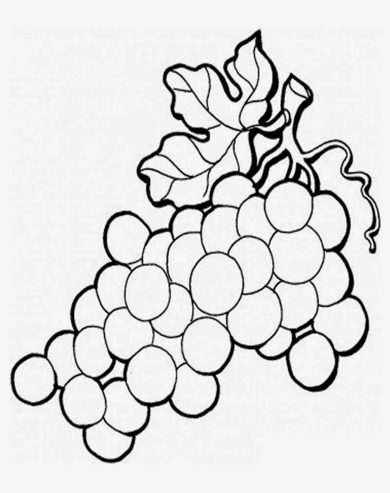 Gambar Mewarnai Anggur