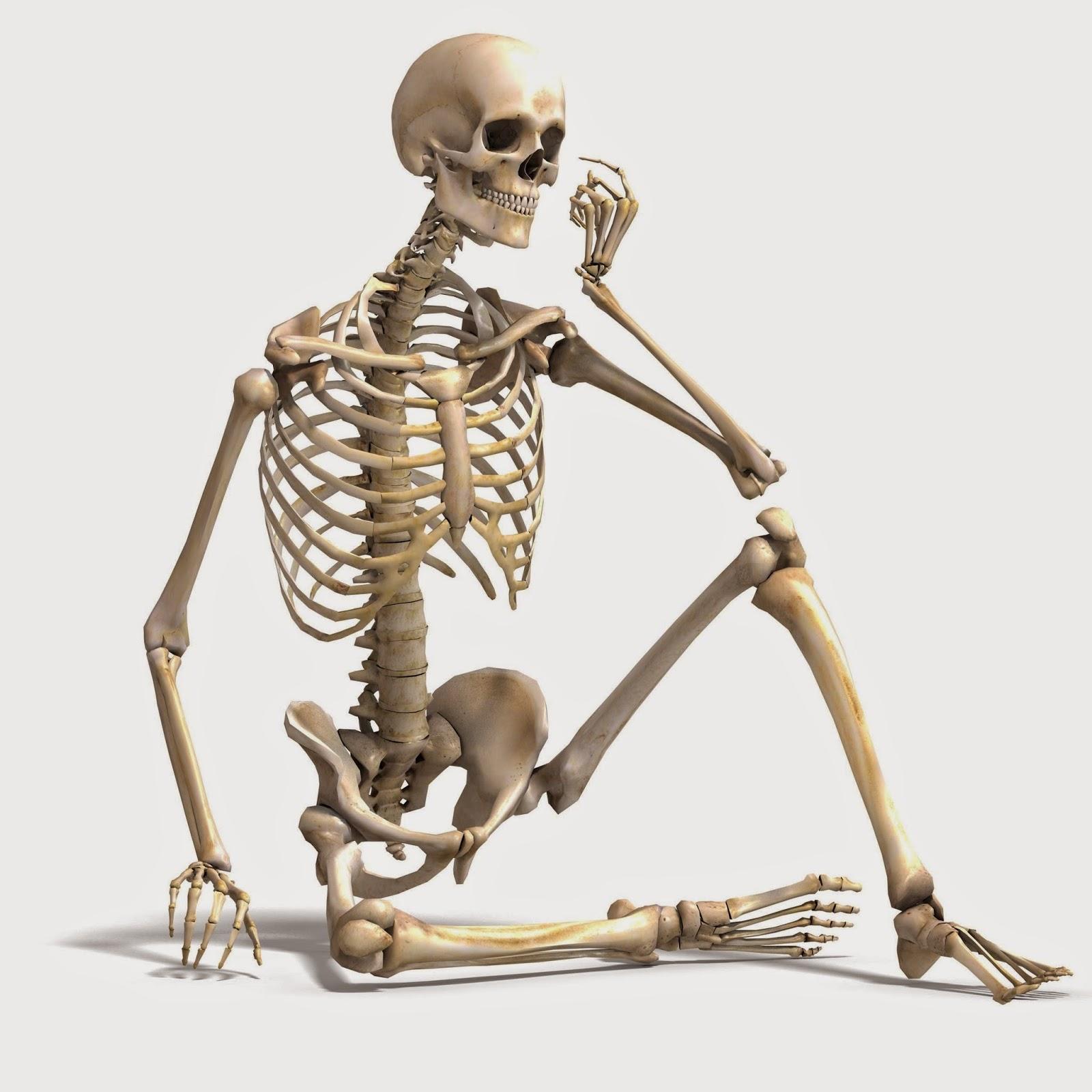 Ms Rainos Science Classroom Skeletal System Blog Post By Danielle