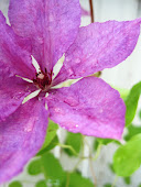 Längtar till sommarens underbara blommor...