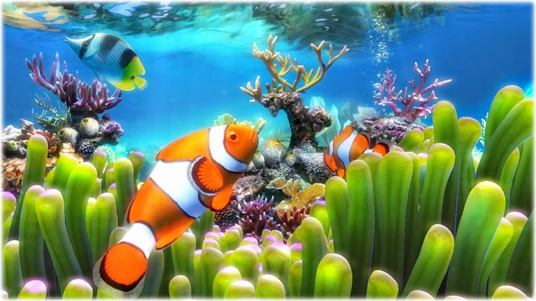3D Fish School Screensaver Free Swimming Freshwater And Saltwater Tanks Moving Bubbles Aquarium Backgrounds Download For Windows 7