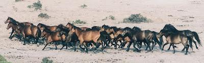Τα άγρια άλογα του Πεταλά