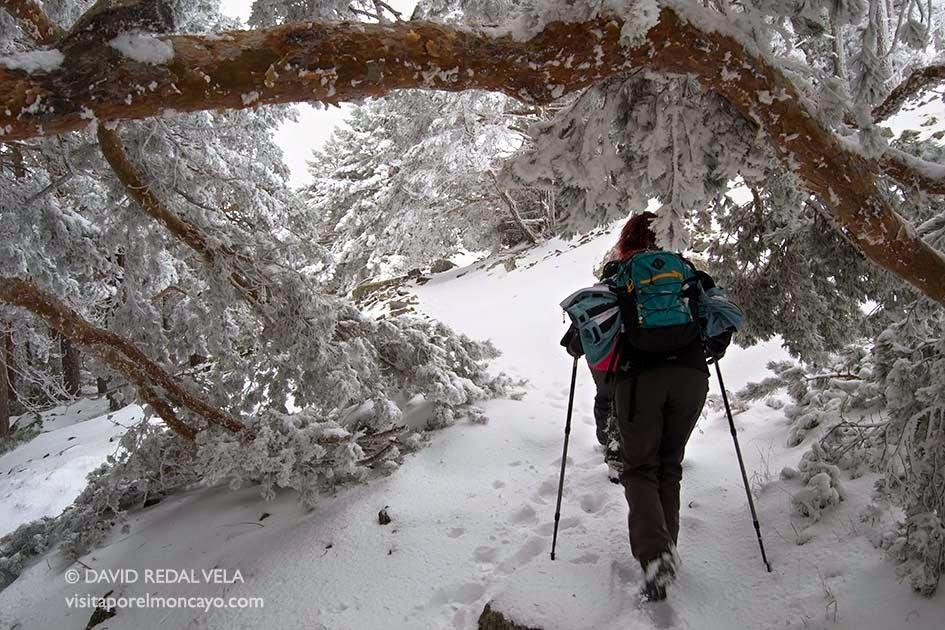 senderismo caminar nieve moncayo montaña sendas rutas naturaleza