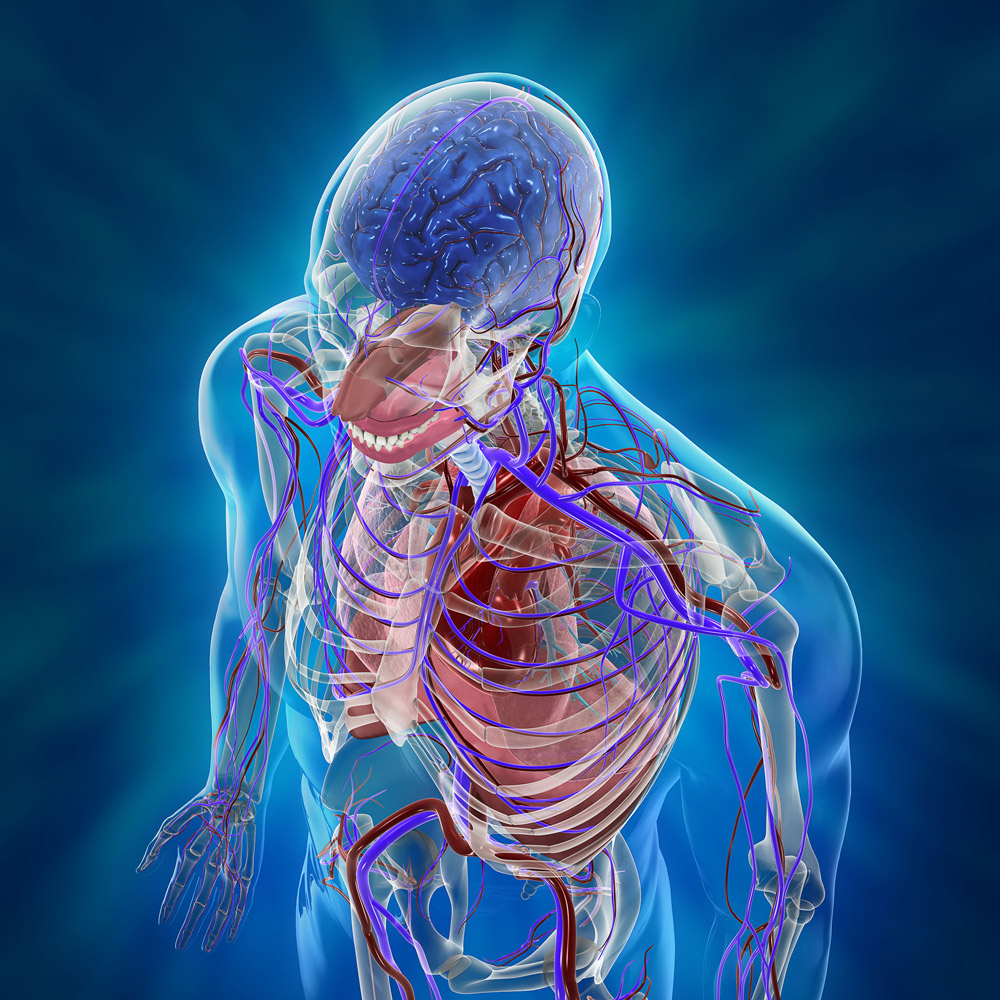 cardio respiratory system The respiratory system takes up oxygen from the air we breathe and expels the unwanted carbon dioxide.
